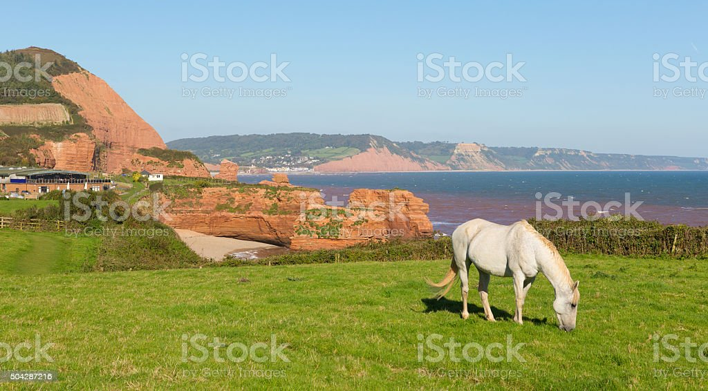 White pony jurassic coast and sandstone rock stacks Ladram Bay stock photo