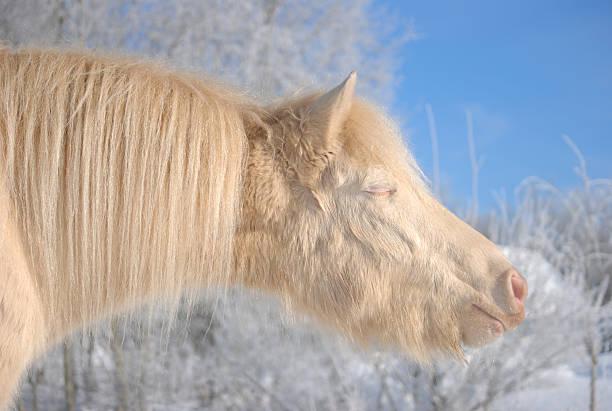 White pony picture id180655147?b=1&k=6&m=180655147&s=612x612&w=0&h= nnsq6f 2outjhzrqwhzpfqd4sp  ma ftvmtb2  vy=