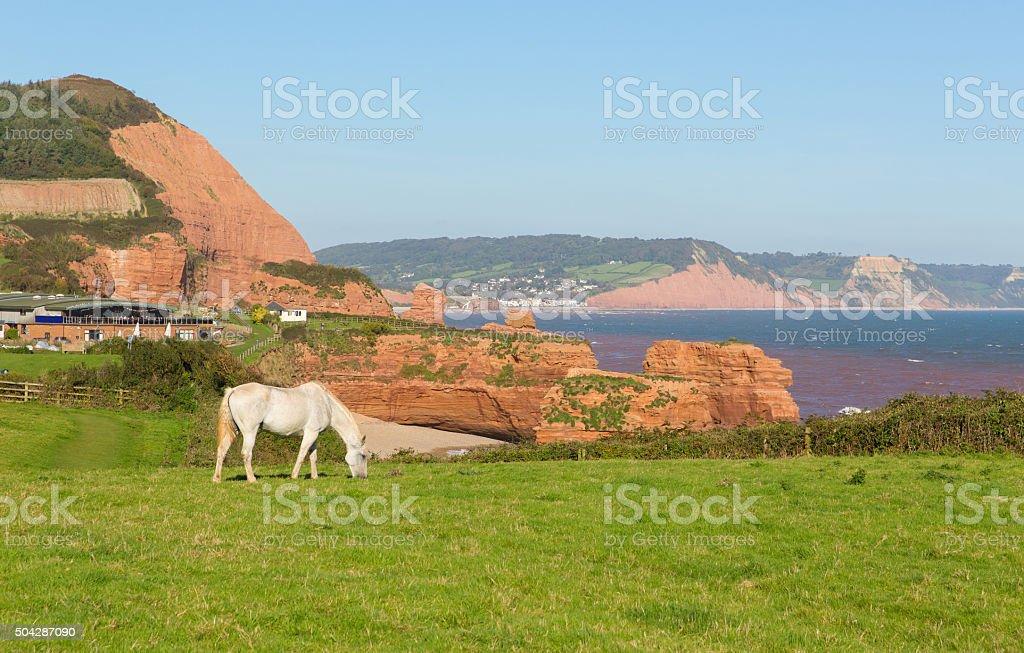 White pony UK jurassic coast Ladram Bay Devon England stock photo