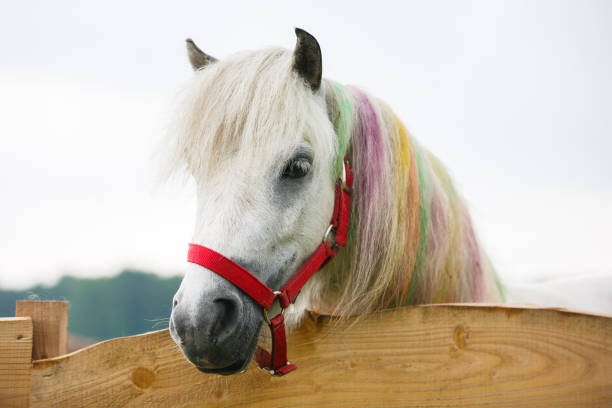 White pony with a painted mane stock photo