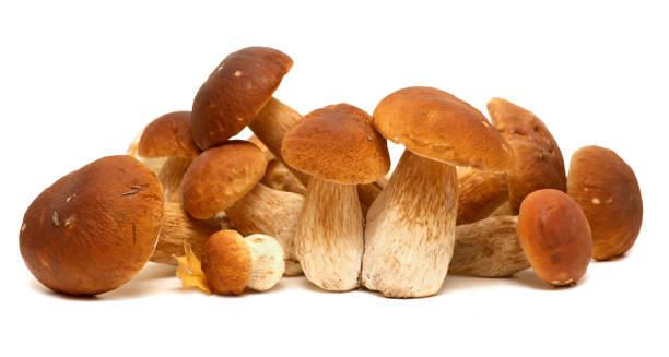 white porcini. Wild Foraged Mushroom selection isolated on background, with shadow. Boletus Edulis mushrooms stock photo