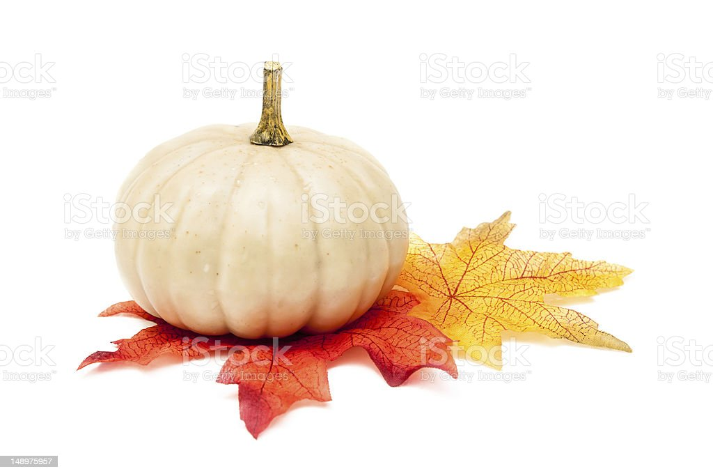 White Pumpkin with Autumn Leaves stock photo