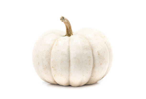 white pumpkin with stem isolated on white background - pumpkin zdjęcia i obrazy z banku zdjęć