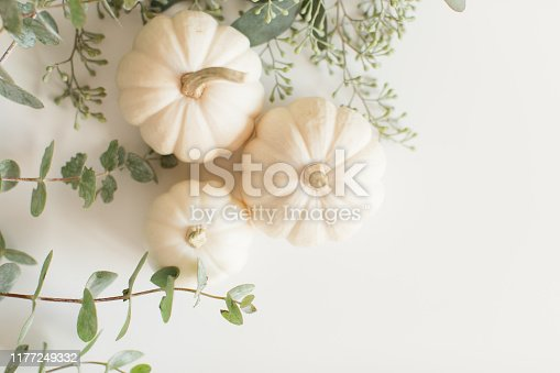 Three cream-colored (White) Pumpkins and all different types of Eucalyptus on a white background in bright natural light.