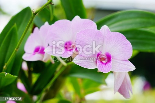 Thailand, Basket, Beauty, Blossom, Botany
