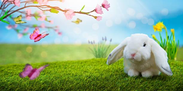 White Rabbit and Magic Landscape stock photo