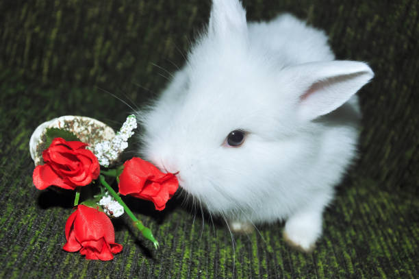 White rabbit baby bunny red flower stock photo