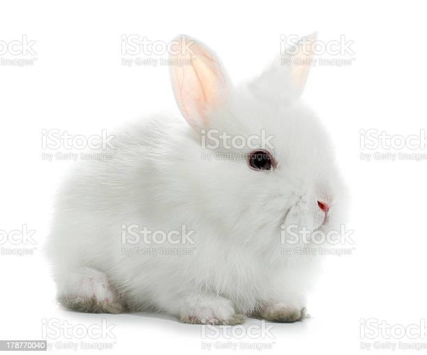 White rabbit bunny isolated picture id178770040?b=1&k=6&m=178770040&s=612x612&h=kwapyqbagiw md9svguezgxfvw9x6jgw vcmzdyw ky=