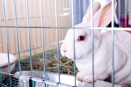 Little white Easter bunny in a cage.  She could be at home or in a shop for sale.  Her name is Strawberry.  Cute.  No people.