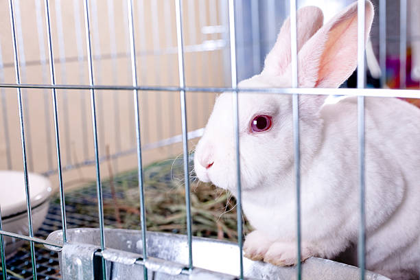 White rabbit for sale. Easter bunny in a cage. stock photo