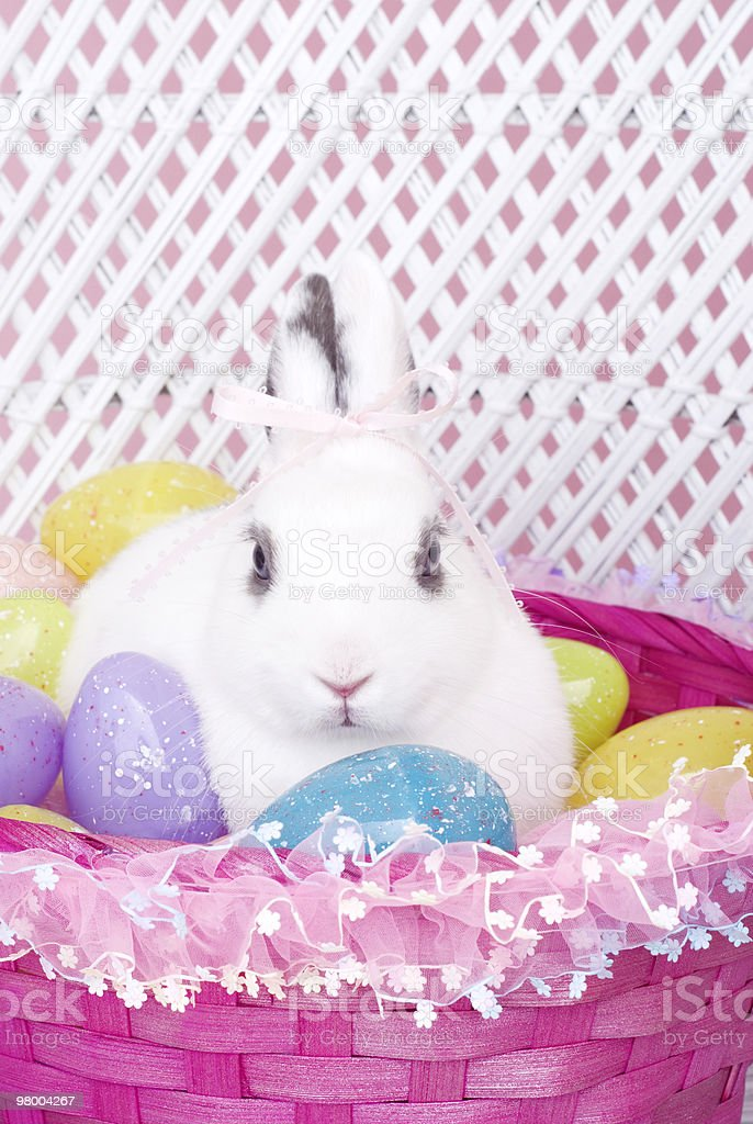 White Rabbit in Basket with Easter Eggs royalty free stockfoto