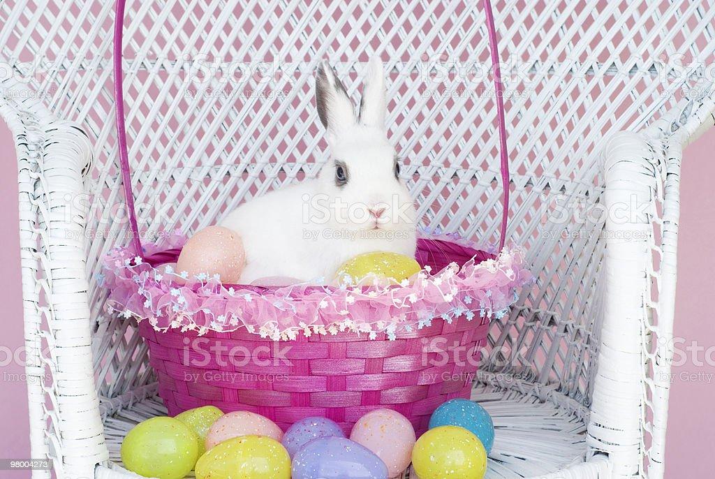 Coelho Branco na cesta com ovos de Páscoa foto royalty-free