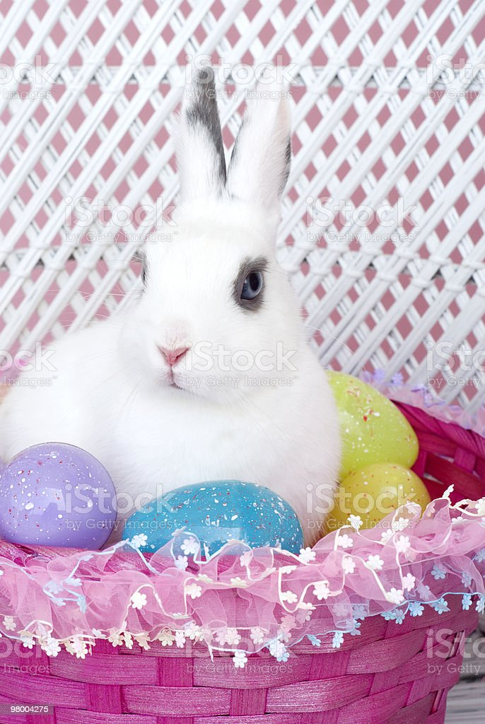 White Rabbit in Pink Basket with Easter Eggs royalty-free stock photo