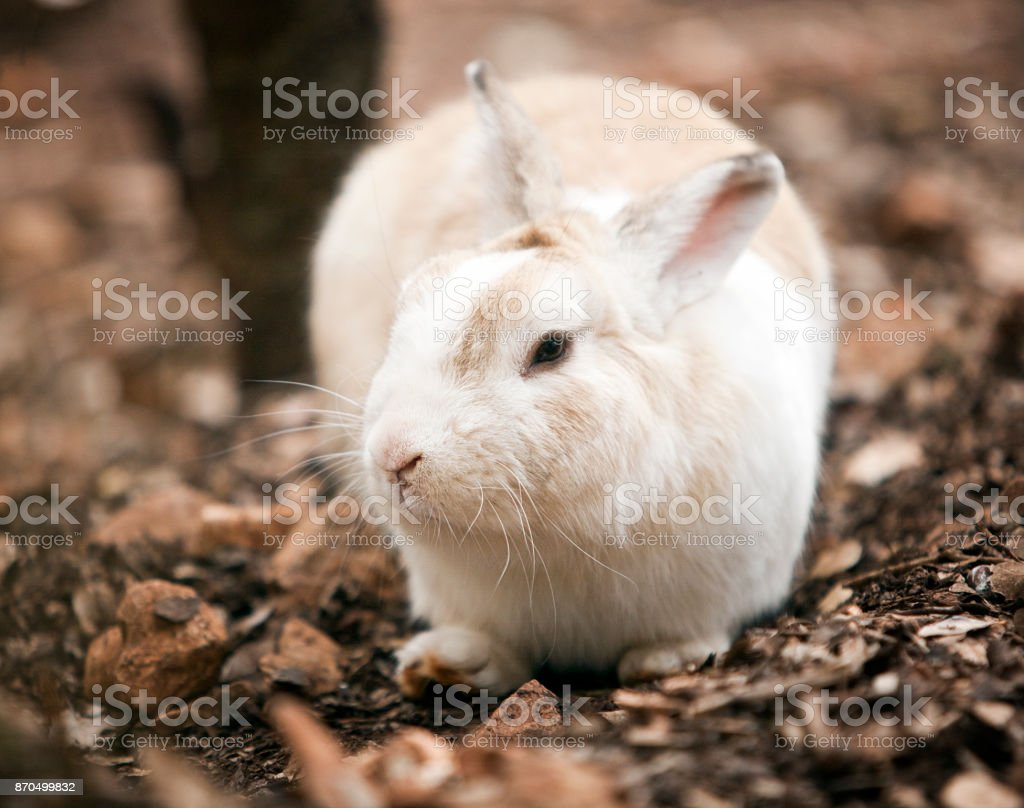 White rabbit in the forest on a land cover. Background, close up, selective focus, shallow depth of field stock photo