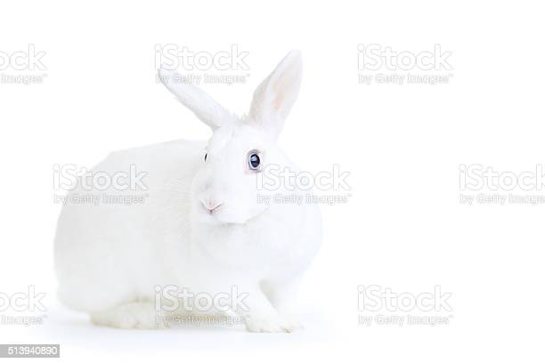 White rabbit isolated on white looking at the camera picture id513940890?b=1&k=6&m=513940890&s=612x612&h=mksnxmwgmtl4th4nfkewxxtqd2e5szy1yn4  0cxxwk=
