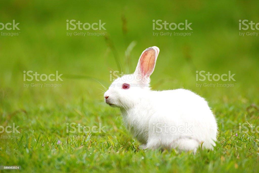 White rabbit on green grass. stock photo