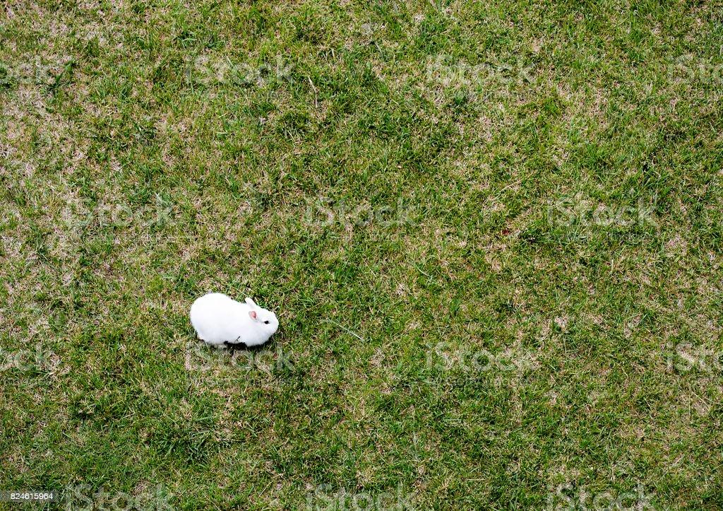 Weisse Kaninchen Auf Dunnen Rasen Wachst Boden Direkt Oben Aus