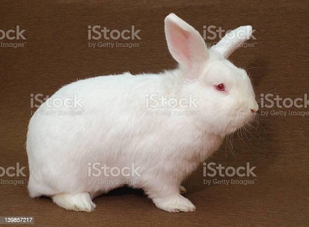 White rabbit picture id139857217?b=1&k=6&m=139857217&s=612x612&h=hda0xz0hvfpvhot1agmr0ykqkkf7jv3fkq8tg97m om=