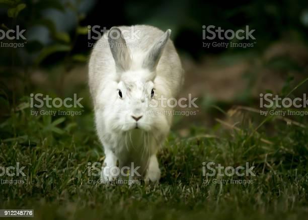 White rabbit running in the garden in spring picture id912248776?b=1&k=6&m=912248776&s=612x612&h=dbzsu7nq prkdsljns0r3desgeasnaaa8ldjkmuyee4=