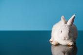 White Rabbit sitting on table