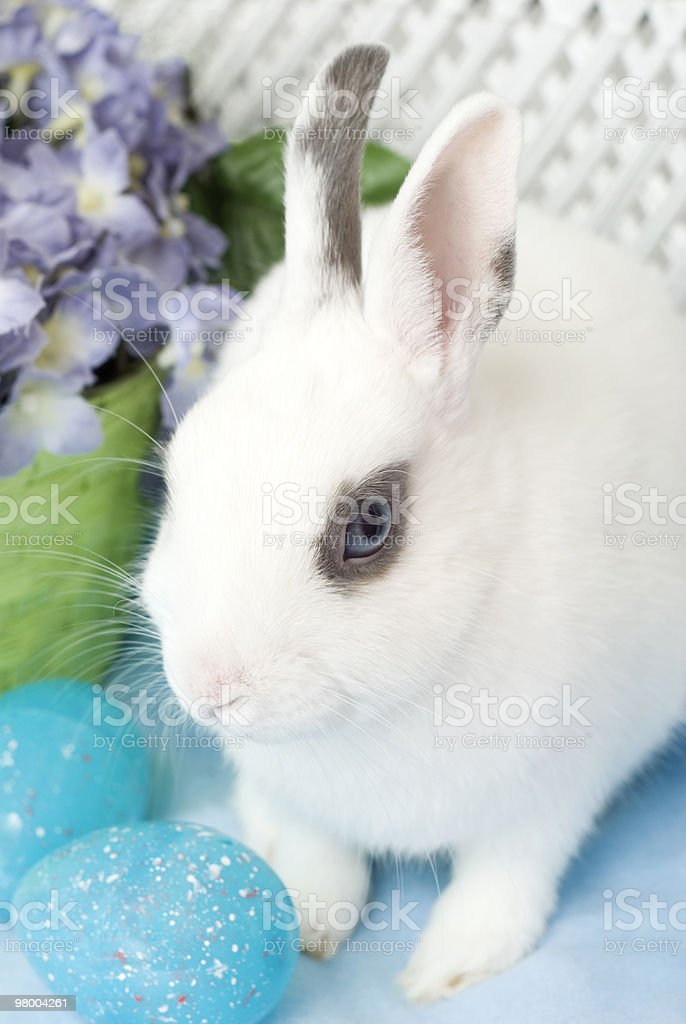 White Rabbit with Blue Easter Eggs royalty free stockfoto