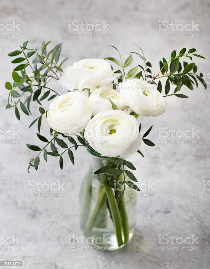 White Ranunculus Flowers In Vase Grey Background Stock Photo More