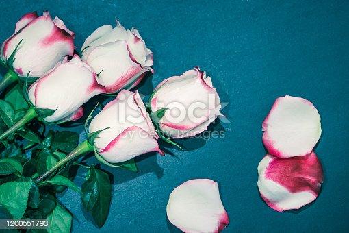 White Red Rose Flowers. Roses