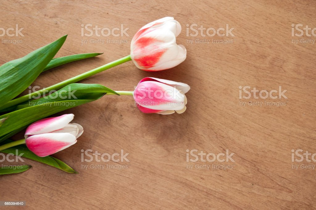 White, red tulips lie on the table foto de stock royalty-free