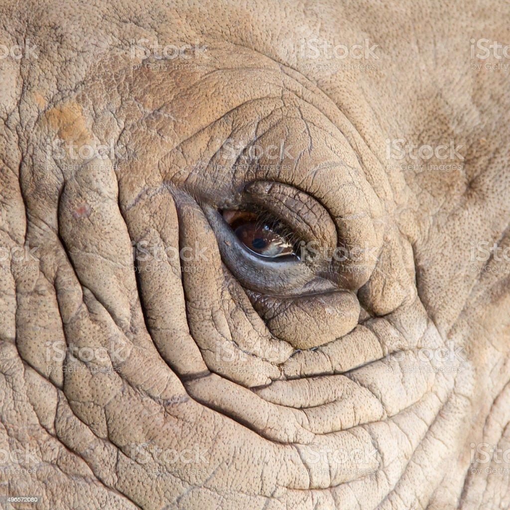 White Rhinoceros eye for background stock photo