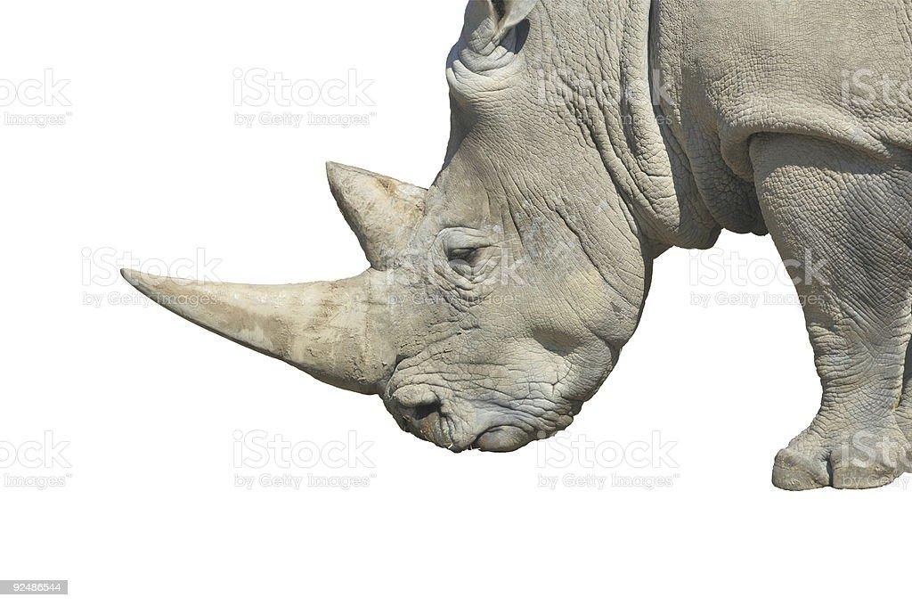 White Rhinoceros (Ceratotherium simum) royalty-free stock photo