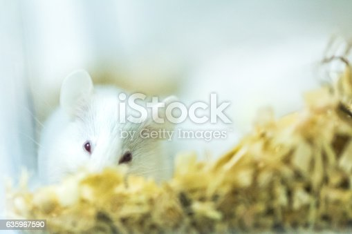 istock white rice in cage 635967590