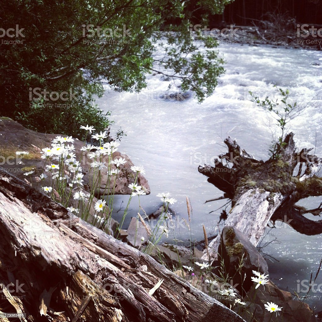 White River Scenic Summer royalty-free stock photo