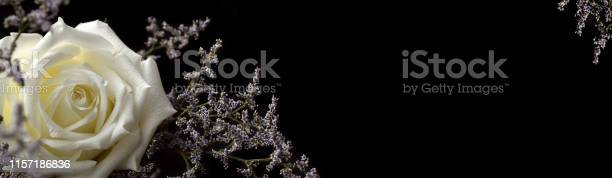 White rose and small blue flowers picture id1157186836?b=1&k=6&m=1157186836&s=612x612&h=sc6lgo7hxkgww9mknsvaoppqzjokg9tq6osk55f8gas=