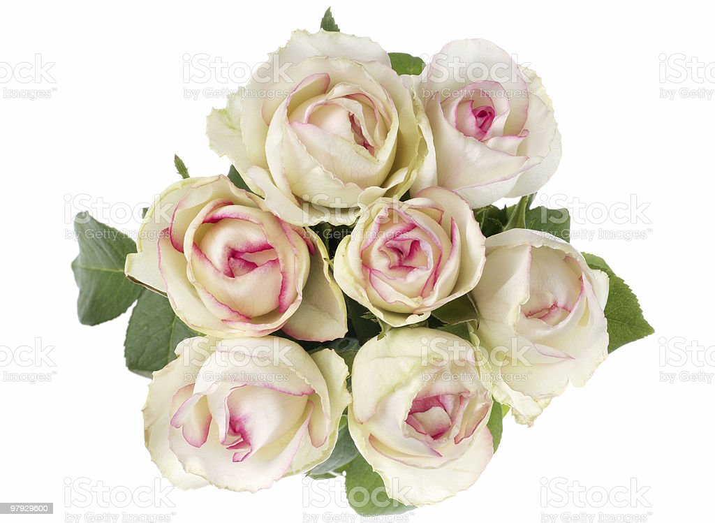 White rose bouquet royalty-free stock photo