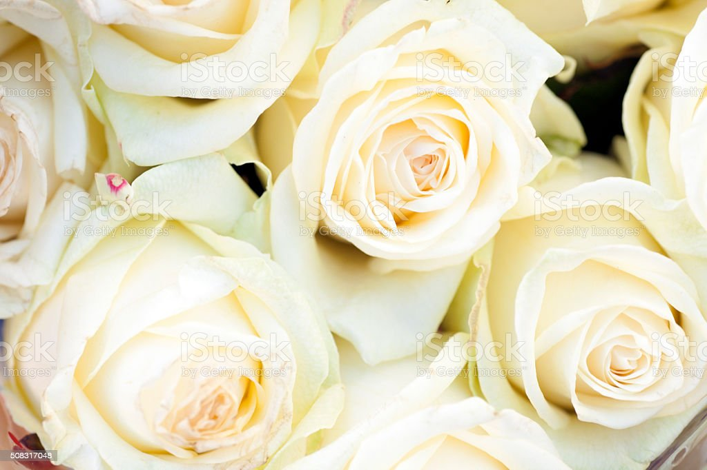 White rose flower backgrounds stock photo more pictures of white rose flower backgrounds royalty free stock photo mightylinksfo
