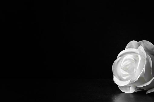 Vela ligera llama sobre fondo istock Ser de los que echar una mano donde  pueden 894377512 Ser los que echar una mano donde istock Velas en la  iglesia 979026558 Velas la iglesia istock Blanco velas ardiendo en la  oscuridad con enfoque en la única ...