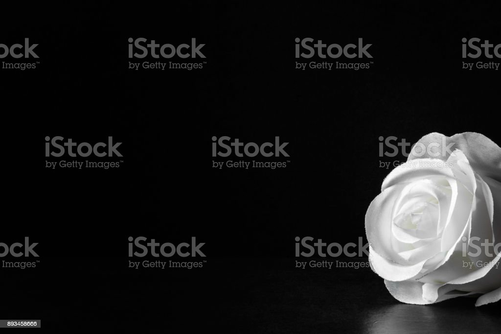 White rose flower on the dark background. Condolence card. Artificial flower. Empty place for a text. stock photo
