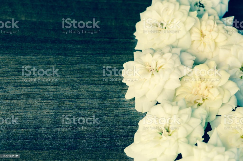 white rose flowers copy space stock photo