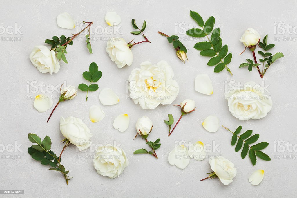 White rose flowers, flat lay styling, pastel floral pattern stock photo