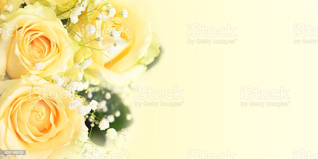 White rose flowers in a corner stock photo