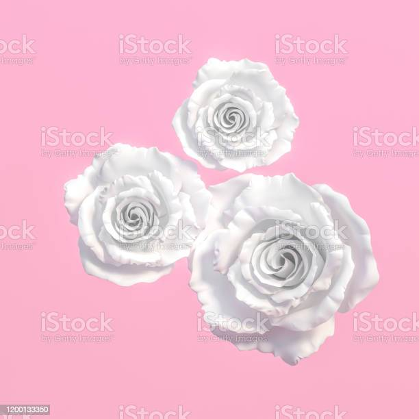 White rose flowers isolated on pastel pink background 3d rendering picture id1200133350?b=1&k=6&m=1200133350&s=612x612&h=81sycxxvosl0 xmcc9bujhirkv5qj29kwjettrmr xy=