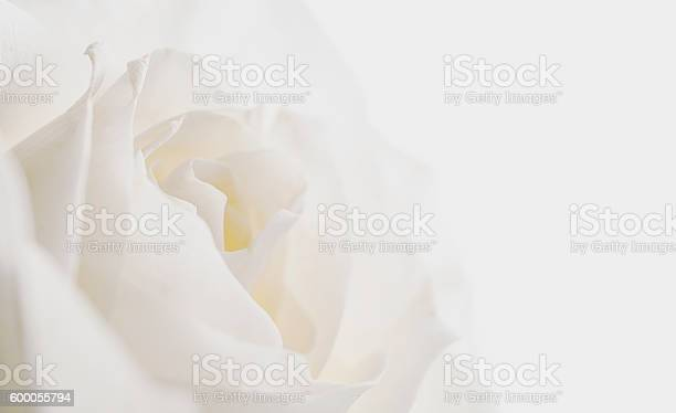 White rose on dark background picture id600055794?b=1&k=6&m=600055794&s=612x612&h=xxpa dsigknhlhvojoqp dvtj mekzlgrpo1irtz 8e=