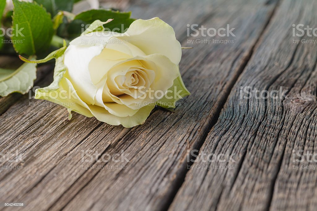 White rose on rustic table stock photo
