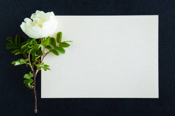 sympathy card stock photos pictures  royaltyfree images