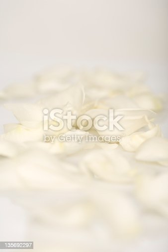 istock White rose petals laying on the ground 135692297
