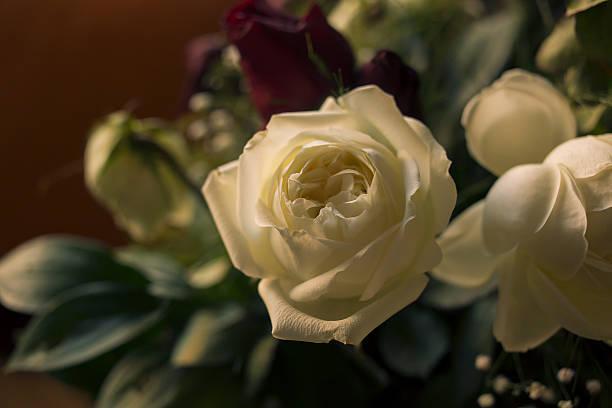 white rose - byakkaya stok fotoğraflar ve resimler
