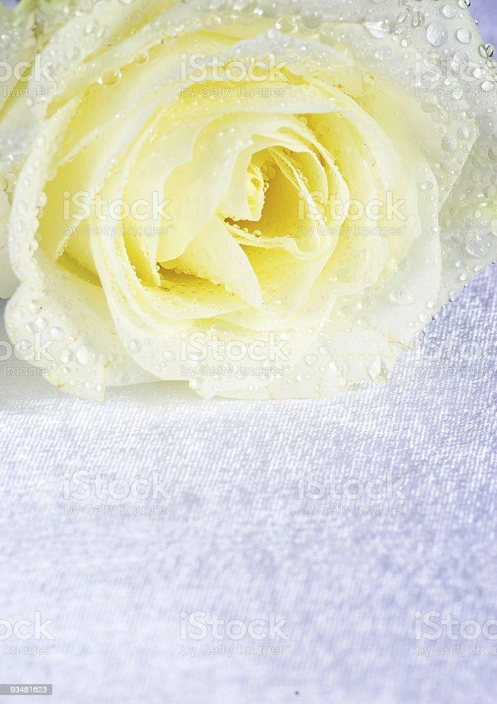 인명별 로즈 - 로열티 프리 0명 스톡 사진