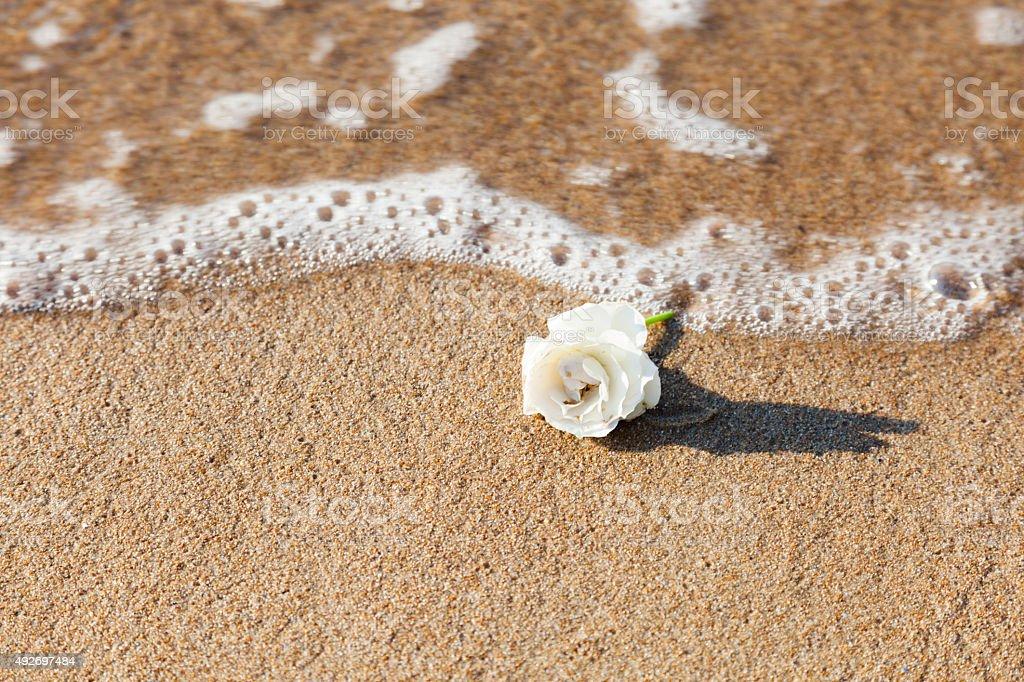 White rose washed up on beach stock photo more pictures of 2015 white rose washed up on beach royalty free stock photo mightylinksfo
