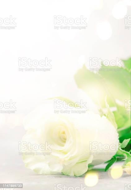 White rose with bokeh on light background vintage postcard imitation picture id1147899733?b=1&k=6&m=1147899733&s=612x612&h=u6uxnneuwn5hyu3zxso1ycafswhgn20u2petgegujdc=