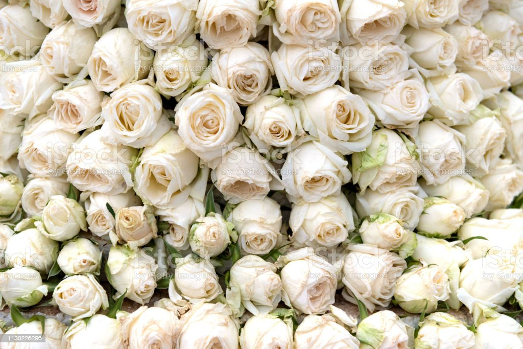 White Roses Are Stack On Flower Rose Texture Background Or